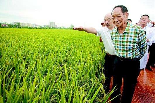 湖南袁创超级稻技术有限公司与袁隆平团队共建院士专家工作站