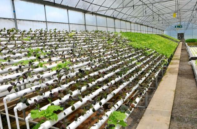 山东将建造现代农业设施和园区