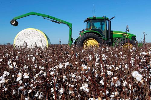 新生产技术有助于我国棉花产业走出寒冬期