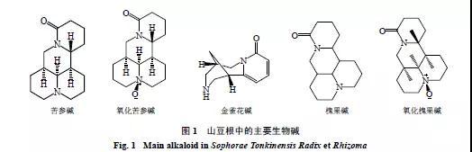 山豆根中毒反应、有毒成分、药理作用