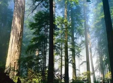 专家分析:欧洲可再生能源指令可能破坏全球森林