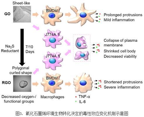 21种具备不同理化性质AuNPs的细胞毒性、与生物分子相互作用