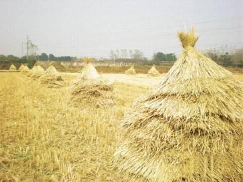 吉林省大力推广秸秆覆盖还田保护性耕作技术