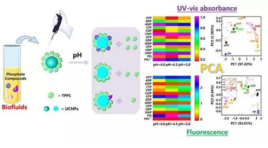 pH调控有机/无机杂化传感器阵列的光学性质实现双模式识别传感分析的应用