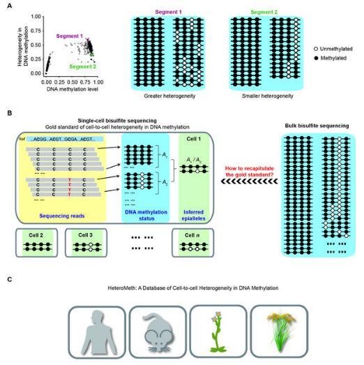单细胞DNA甲基化异质性建立了金标准