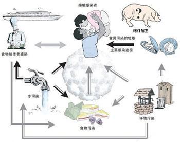 病毒的传播途径、变异及疫情预测研究