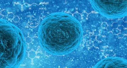 美国科学家在人体内找到真正的骨骼干细胞