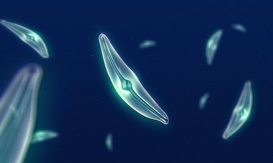 地球上可能有1万亿个物种,我们只发现了十万分之一