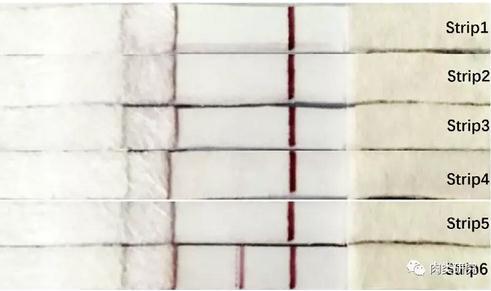胶体金免疫层析法:一种更便携实用的检测空肠弯曲杆菌方法