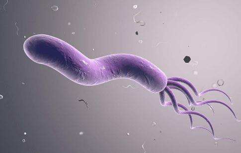 幽门螺旋杆菌根除新方案:牛乳铁蛋白研发抗耐药幽门螺旋杆菌