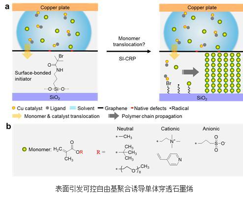 乙烯基单体在引发剂的驱动下可穿过单层CVD石墨烯实现表面引发聚合