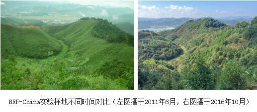 关于森林BEF的关系及其内在机制的研究进展