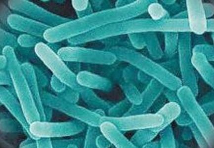 """冰箱中的可怕""""细菌"""""""