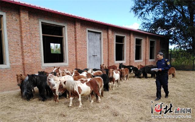 河北省首次进口的36匹荷兰矮马落户秦皇岛