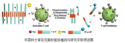 一种免疫响应释放他克莫司的策略有望克服肝脏移植排斥