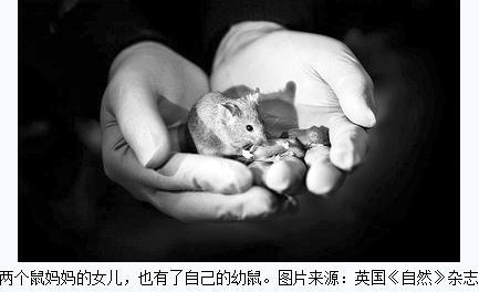 动物克隆:两只雌鼠的DNA培育出了健康幼仔