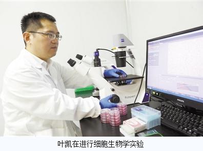 叶凯:挖掘鸦片罂粟的药用价值及生物信息编码
