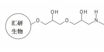 丝氨酸蛋白酶纯化的解决方法