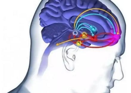 帕金森病:多巴胺替代药物治疗和脑深部刺激术外科治疗