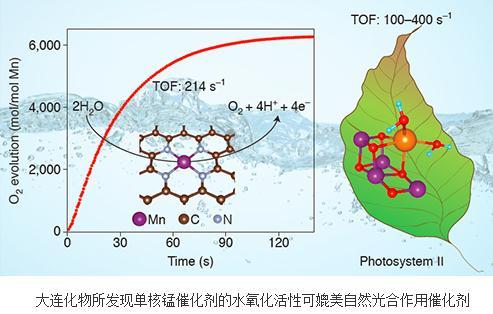 单核锰反应中心上水氧化反应机理