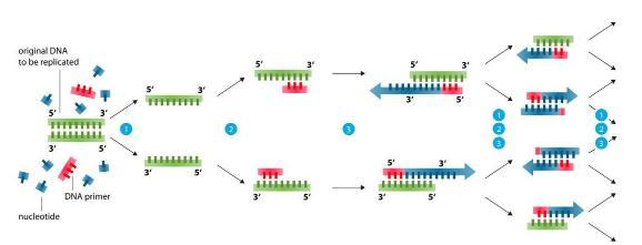 实时荧光PCR检测项目临床意义汇总