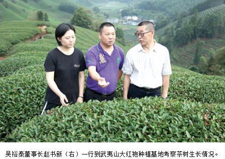 大红袍:吴裕泰茶叶怎么样?