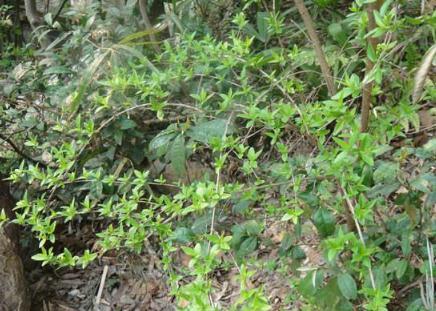 """""""西南山地典型生态系统植物多样性对气候变化的响应""""通过验收"""