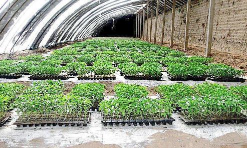 河北省实施绿色循环优质高效特色农业促进项目