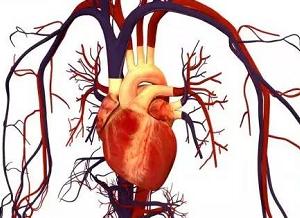 基因突变也有益处?降低心脏病风险