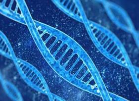 人类为什么寿命比较长?存在基因突变