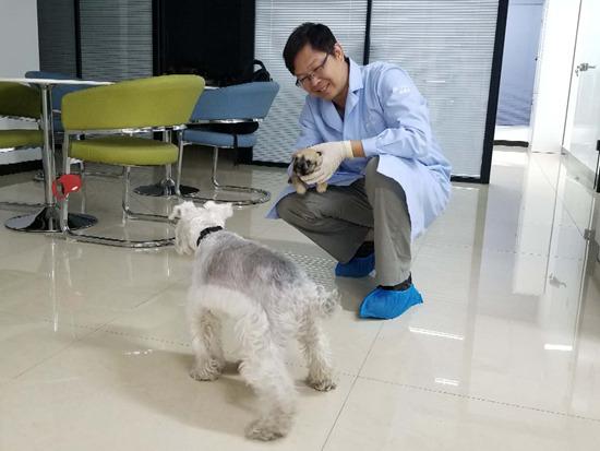 克隆宠物犬兜兜有争议,DNA一样但无法复制灵魂