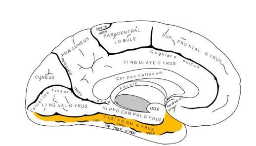 人类的嗅觉或与空间记忆力受到同一个脑区的控制