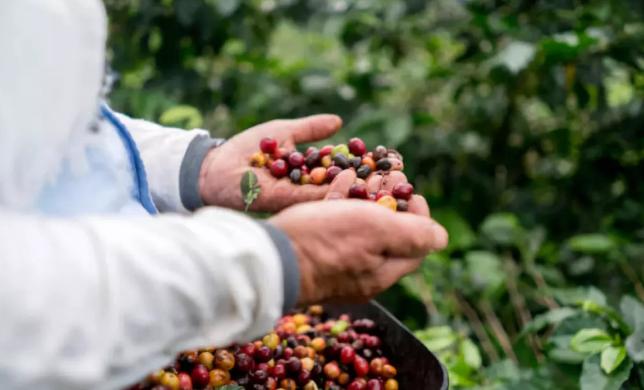 英国开发新微生物燃料电池 可用咖啡废料发电