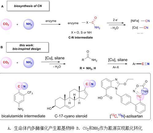 芳基卤代物的催化氰化反应用于制备氰类药物