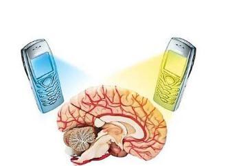 大鼠接受手机辐射的时间和剂量结果不能直接用于人类