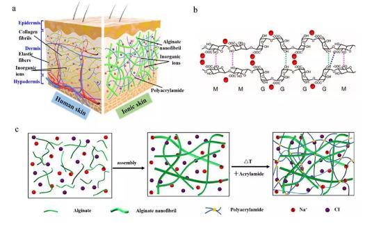 一种基于海藻多糖超分子纳米纤维水凝胶的离子皮肤传感器