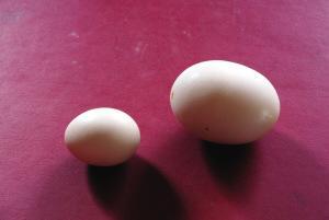 SPME-GC-MS鉴定鸡蛋中的挥发物