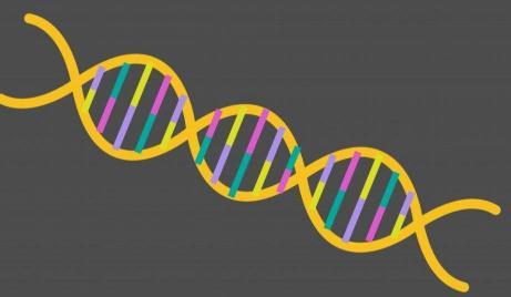 一种实现精准、无模板基因组编辑的方法