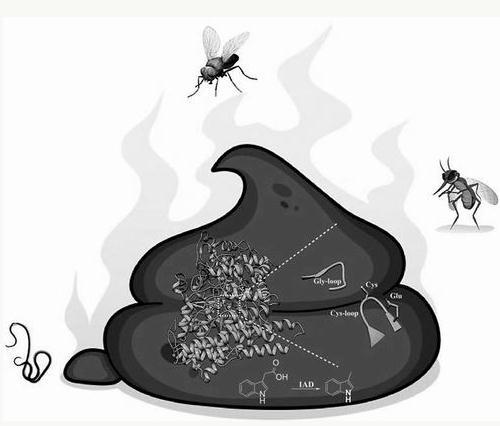 大便臭是什么原因?恶臭分子活性如何抑制