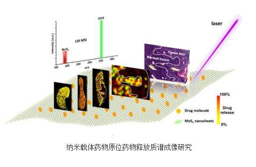 LDI MSI:一种新型无标记激光解吸电离质谱成像技术