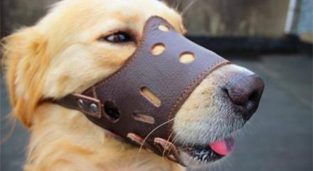武汉新规:遛狗不挂犬牌、束犬链、戴嘴套最高罚1000元,物业不管罚3万