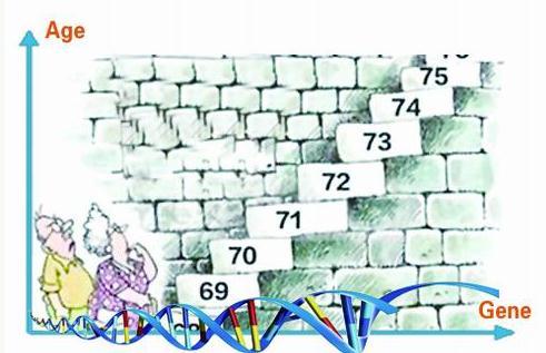 基于DNA甲基化标记预测一个人生命周期的方法