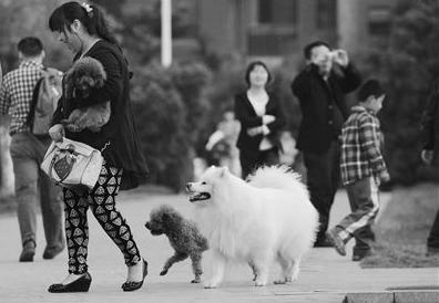 杭州今年接报涉犬警情达1.3万人 不规范养犬让无辜市民屡屡受害