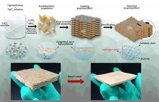 层状结构密实化的纳米木质纤维素/磷酸氢钙复合材料