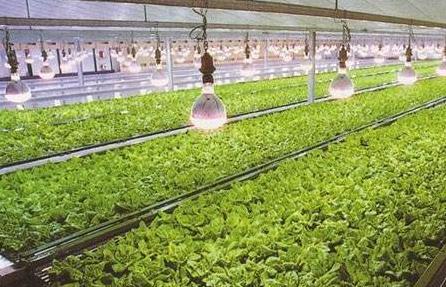 三安光电提供芯片!农业照明领域再现强强联手