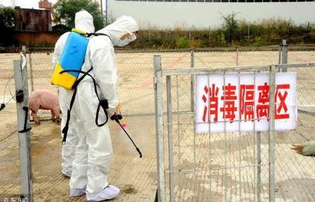 《非洲猪瘟疫情防控八条禁令》全文解读