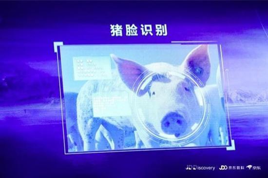 """京东农牧联合中国农业大学建设智能猪场示范点,并运用""""猪脸识别""""技术"""