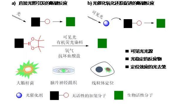 将常用于荧光成像的有机荧光分子作为生物相容的光催化剂