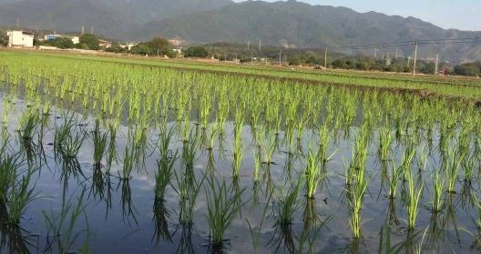 延庆农业面源污染治理现状与相关措施