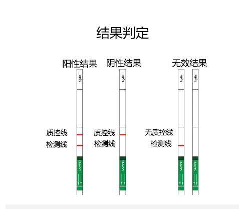 汪小福:转基因成分蛋白质快速检测试纸条